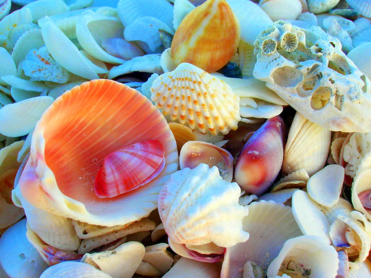 beautiful-nature-seashell-shell-Favim.com-227119   Andrew ...