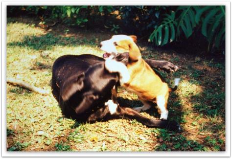 charlie & B playing (2) (Large)