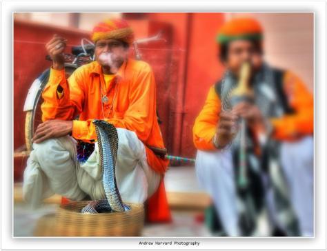 Jaipur snake charmers 19-2-2014 (2) (Large)