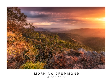Morning Drummond