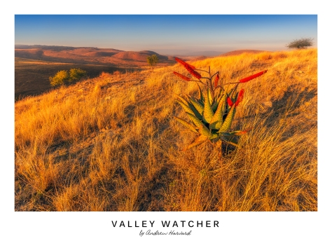 Valley Watcher