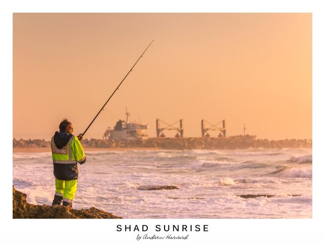 Shad Sunrise
