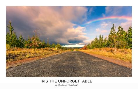 Unforgettable Iris