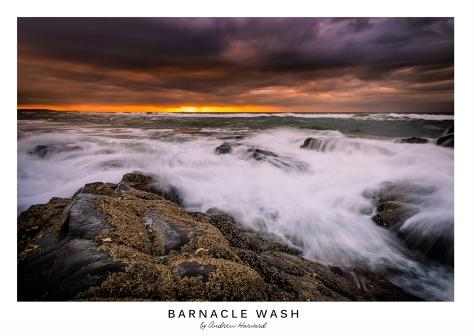 Barnacle Wash