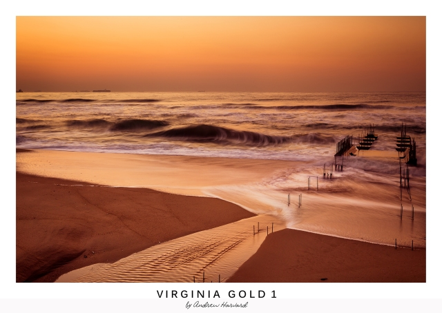 Virginia Gold 1