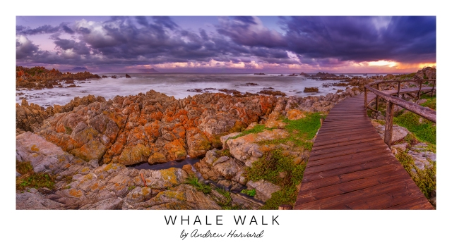 Whale Walk