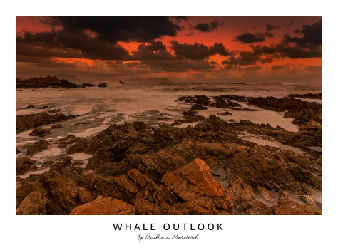 Whale Outlook