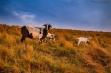 Hillbilly Goat