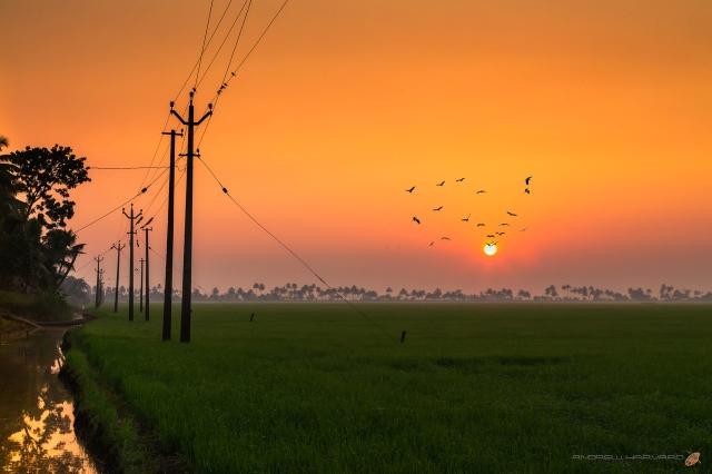 Kerala Dawn