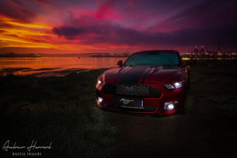 Mustang Sunrise (Large)